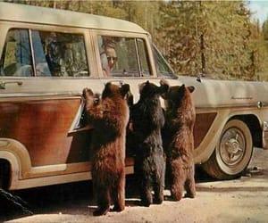 bear, car, and animal image