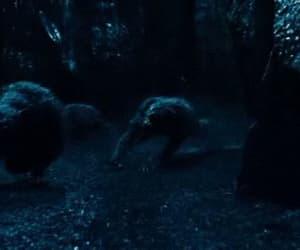 gif, wolf, and lobos image