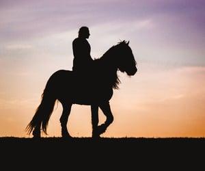 siluet, pferd, and horse image