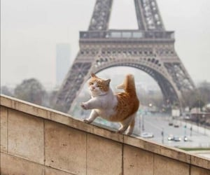 cat, paris, and animal image