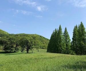 green, korea, and nature image