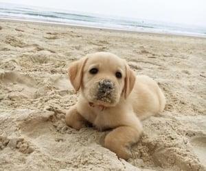 adorable, beach, and dog image