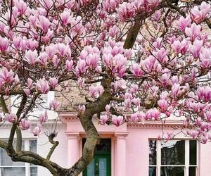 blossoms, Great Britain, and house image