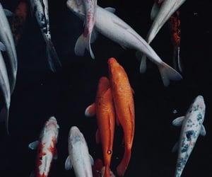 wallpaper and fish image
