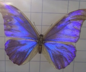 aesthetic, butterfly, and animal image