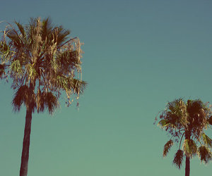 mallorca, summer, and palms image