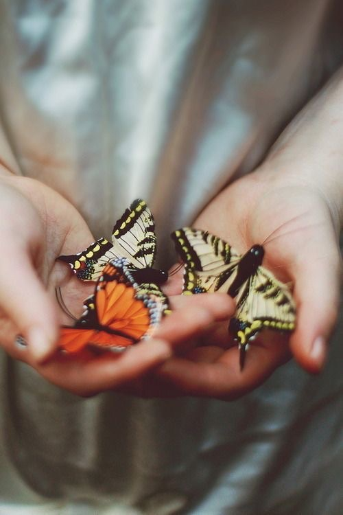 butterfly, hands, and nature image