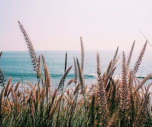 nature, adventure, and beach image