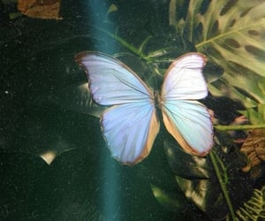 butterfly, aesthetic, and nature image
