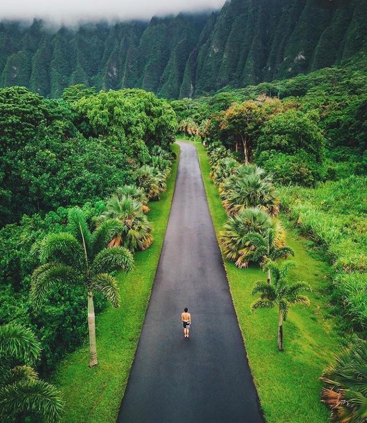 beautiful, hawaii, and nature image
