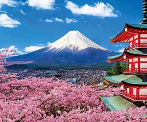 asia, beautiful, and cherry blossoms image