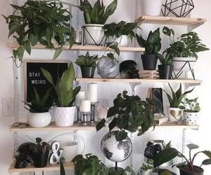 home decor, plants, and art image