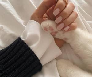cat, kitten, and pet image
