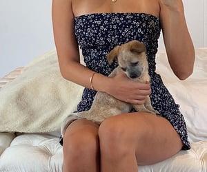 dog, dress, and girl image