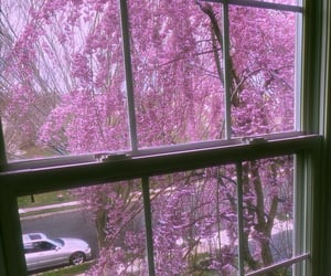 flowers, nature, and cherrytree image
