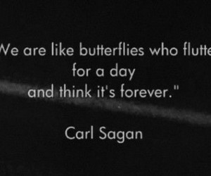 butterfly, quote, and carl sagan image