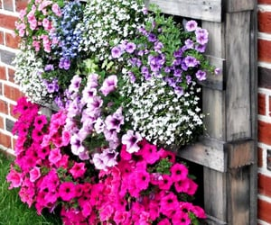 diy, gardens, and pallet ideas image
