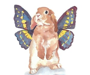 bunny, butterfly, and rabbit image