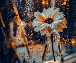 flowers, rain, and aesthetic image