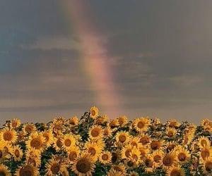 sunflower, flowers, and rainbow image