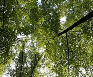 green, tree, and leaves image