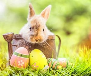 rabbit, animals, and bunny image