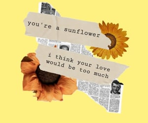 sunflowers and wallpapers image