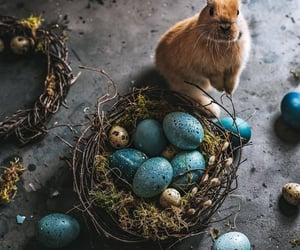 cute bunny, nest, and decorations image