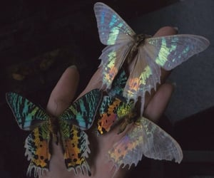 colorful, rainbow, and butterfly's image