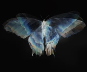 butterfly and translucent image