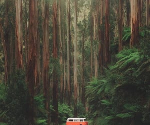 forest, orange, and volkswagen image
