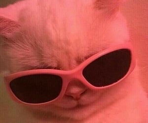 cat, pink, and glasses image