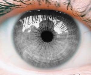 eyes, eye, and grey image