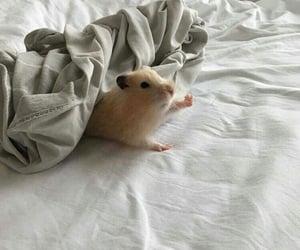 animal, animals, and cuties image