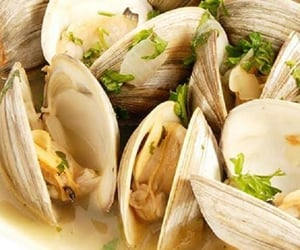 clams, seafood, and pressure cooker recipes image