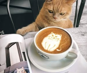 cat, animal, and coffee image