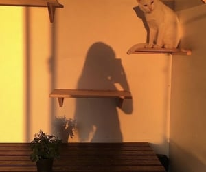 cat, girl, and aesthetic image