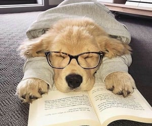 dog, puppy, and book image
