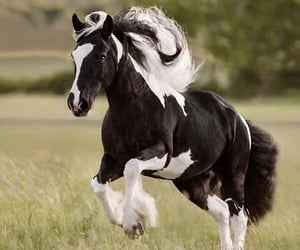 beautiful, black and white, and horse image