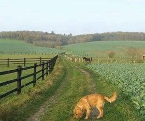 dog, green, and animal image