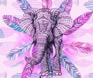 boho, elephant, and classy image