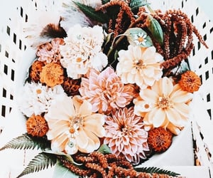 beautiful, blooms, and color image