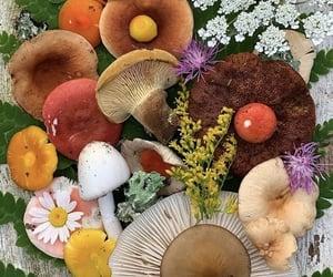 flowers, fungi, and mushrooms image