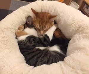 cats, couple, and kawaii image