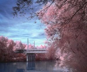 bridge, Dream, and flamingo image