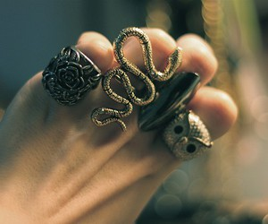 owl, rings, and snake image