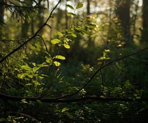 green nature beautiful image