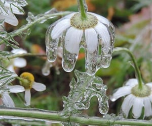 flowers, nature, and ice image