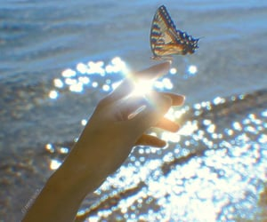 aesthetic, butterfly, and ocean image