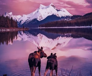 animals, canada, and landscape image